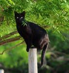 Black cat stock