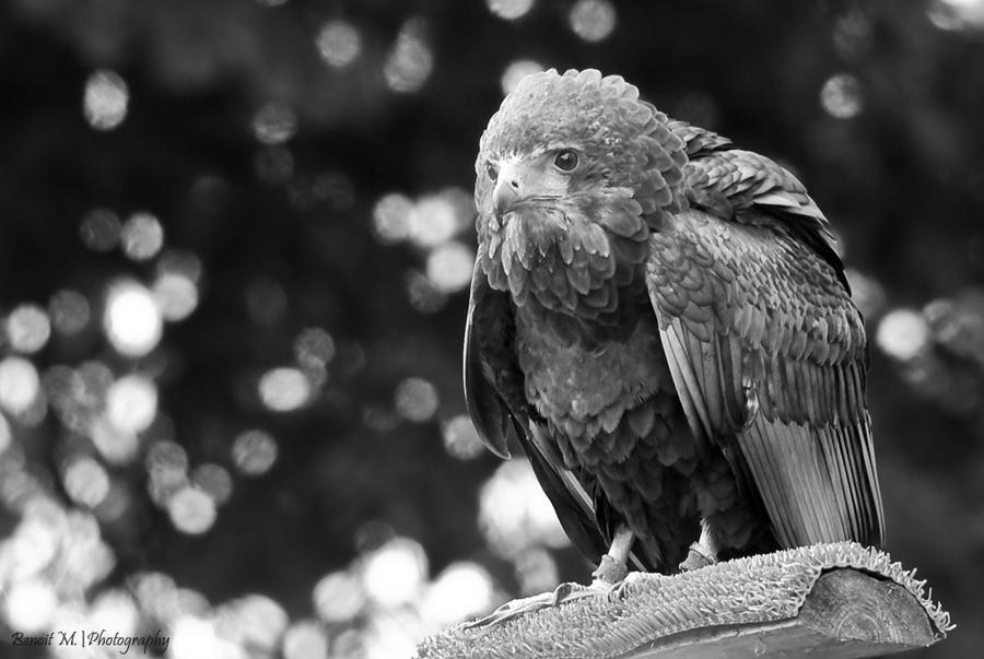 Harpy by sLy2k