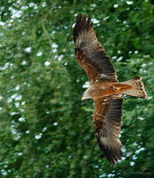 Flight hunting by sLy2k