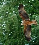 Flight hunting