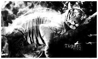 lazy tiger by Mrbzzzyk