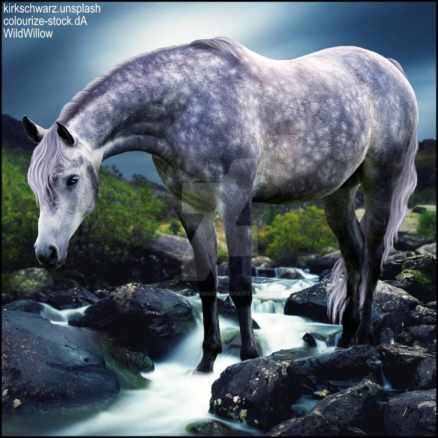 HEE Horse Artwork - Wellington