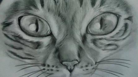 cat cat cat cat :3