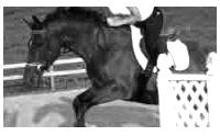 ID august by horsegurljump