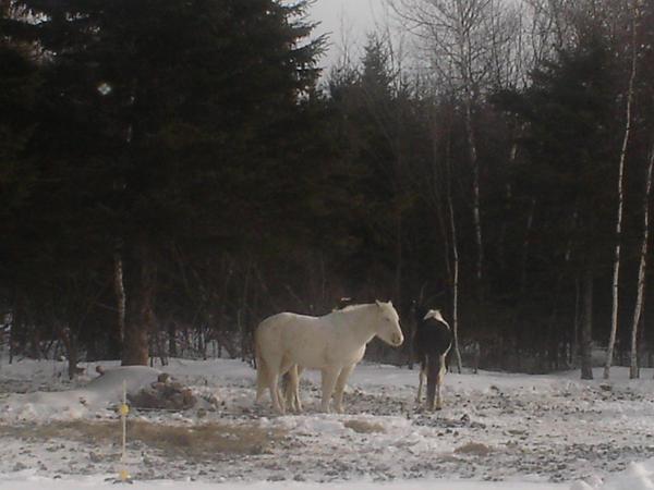 Horses I by RainbowIrishElf