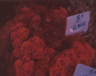 rouge roses