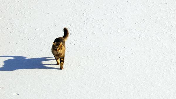 The Peanut In Winter by jlawrencem