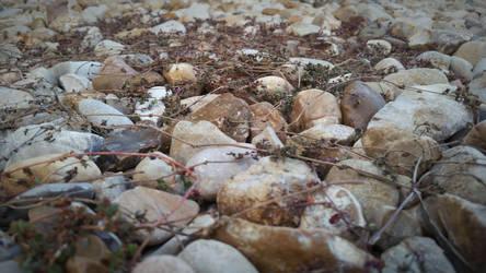 Pebbles by PandarenBabe