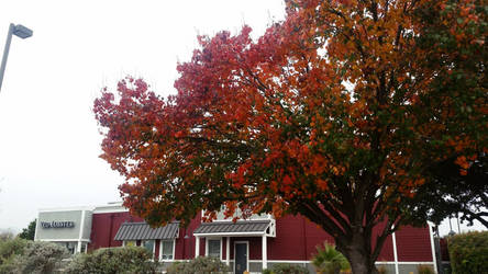 Red Lobster in Autumn by PandarenBabe