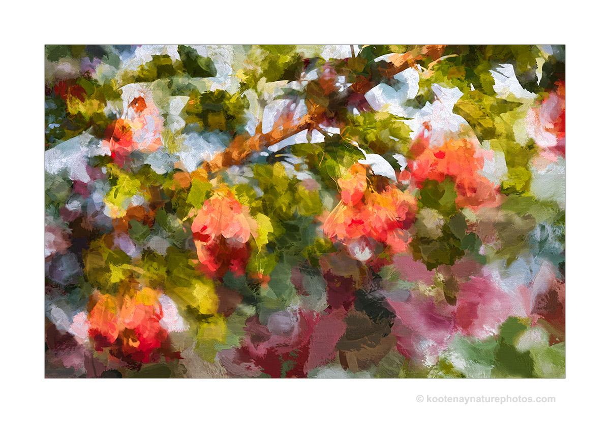 Maple-2 by kootenayphotos