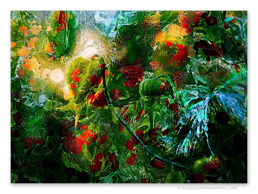 Flowers-3 by kootenayphotos