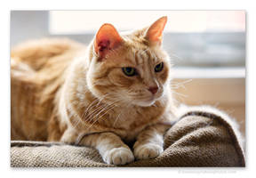 Ginger by kootenayphotos