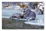 River Otters 2