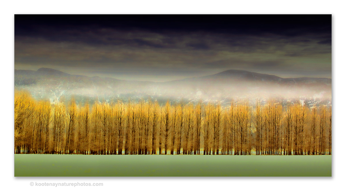 Trees-10 by kootenayphotos
