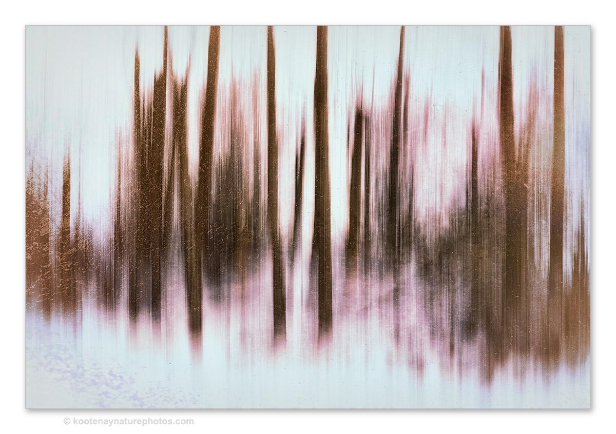 Trees-12 by kootenayphotos