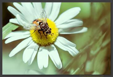 Fly by kootenayphotos