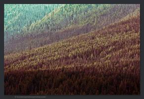 Forest by kootenayphotos