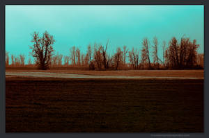 Quad Tone Trees by kootenayphotos