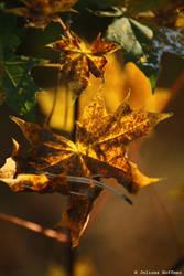 Autumn no.8 by eaglevis