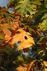 Autumn no.9 by eaglevis