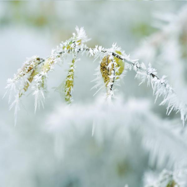frosty 2 by MorkOrk