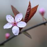 spring fever by MorkOrk
