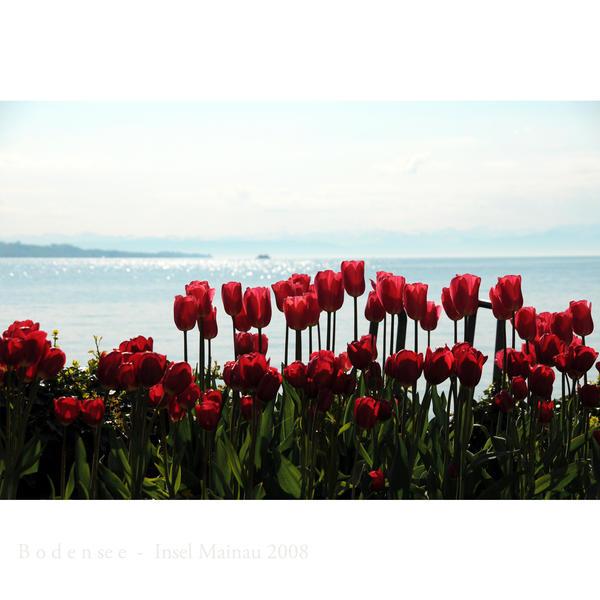Fleurs. Isle_of_flowers_by_MorkOrk