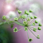 weed 2 by MorkOrk