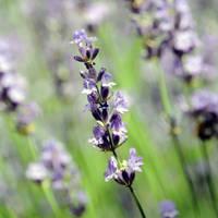fragrance of summer by MorkOrk