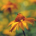 golden summer by MorkOrk
