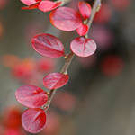 red autumn 2 by MorkOrk
