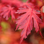 the autumn is red... by MorkOrk