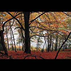 autumn scenery by MorkOrk