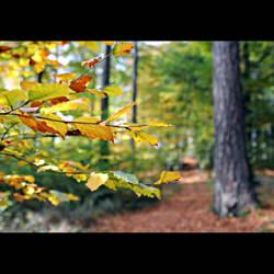 autumn day by MorkOrk