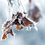 cold winter days by MorkOrk