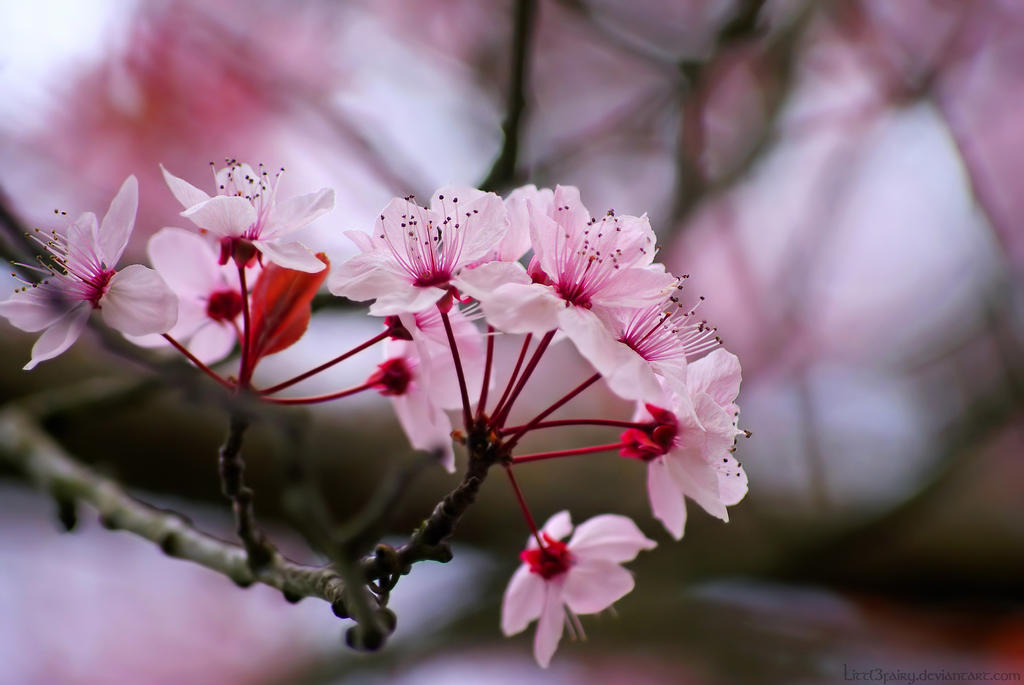 Top Ten Most Beautiful Flowers In World