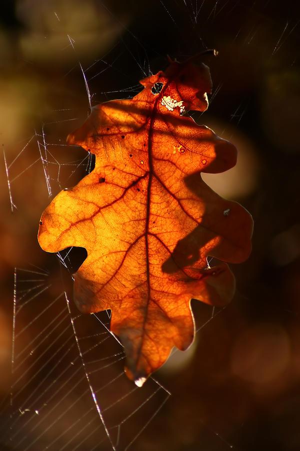 Autumnal leaf by Samantha-meglioli