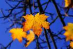 Last autumn moments