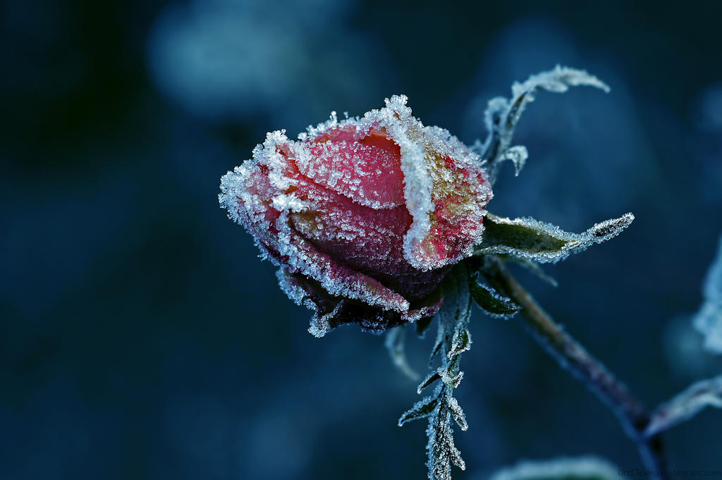 So cold by Samantha-meglioli