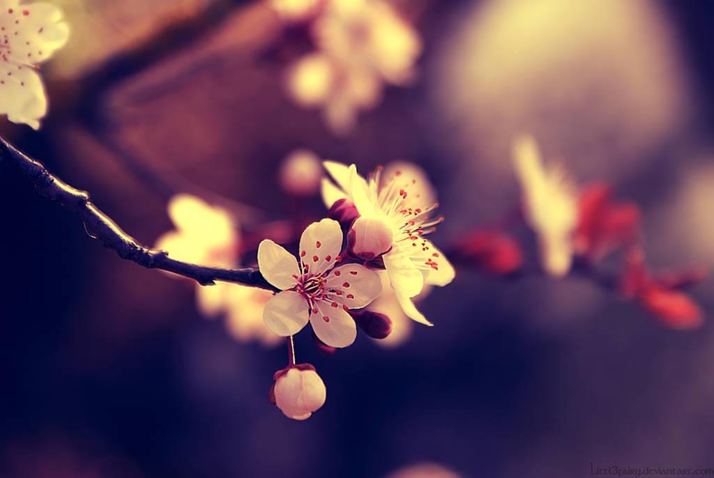 My beautiful Spring by Samantha-meglioli