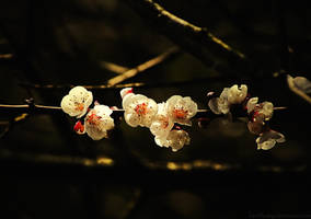 Goldy japanese by Samantha-meglioli