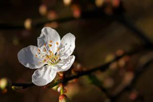 Autumn or Spring? by Samantha-meglioli