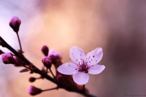 I looooove Spring by Samantha-meglioli