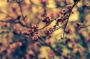 Retro sakura tree by Samantha-meglioli
