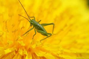 Jiminy Criquet by Samantha-meglioli