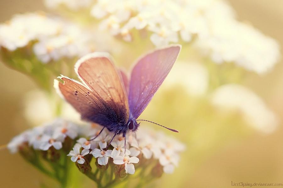 butterfly heaven wallpaper - photo #41