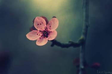 Spring Halo by Samantha-meglioli