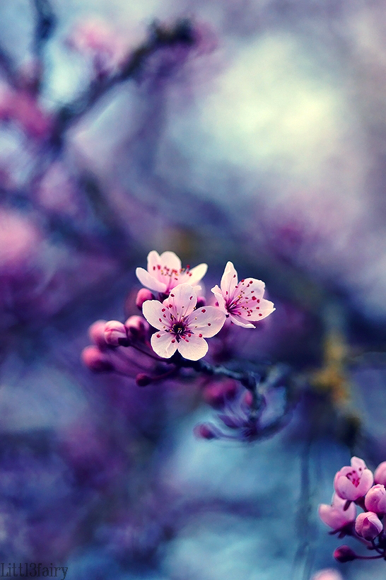 Spring Dreams... by Samantha-meglioli
