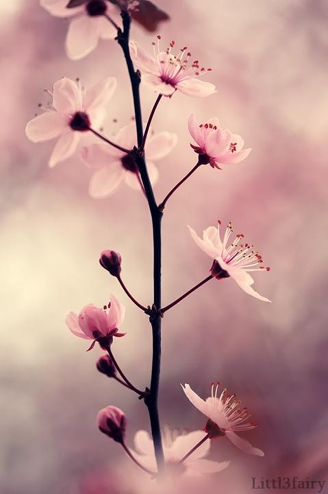 Like a perfect Dream... by Samantha-meglioli