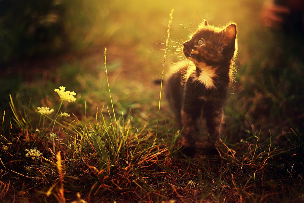 First time outside by Samantha-meglioli